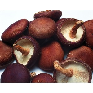 Powder and Granular Compound Seasoning--Mushroom